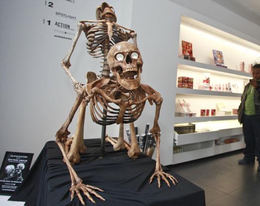 Скелет девочка занимается сексем