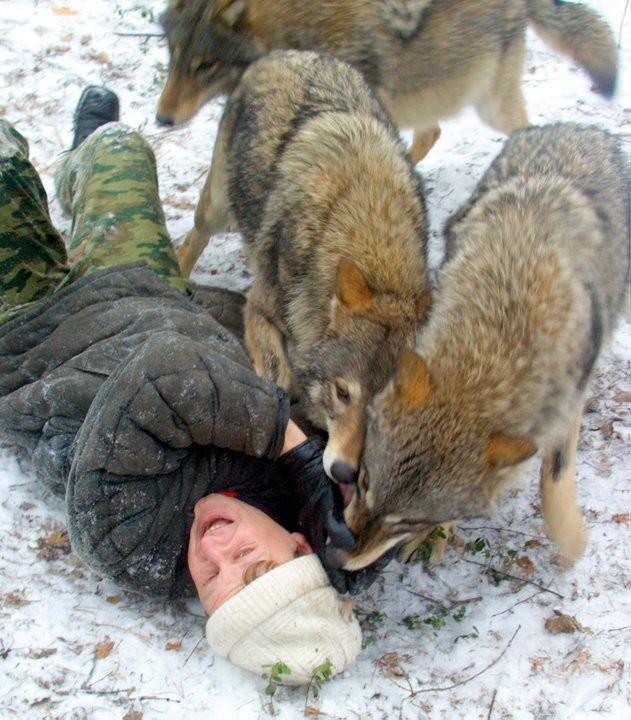 Картинки весьегонская волчица