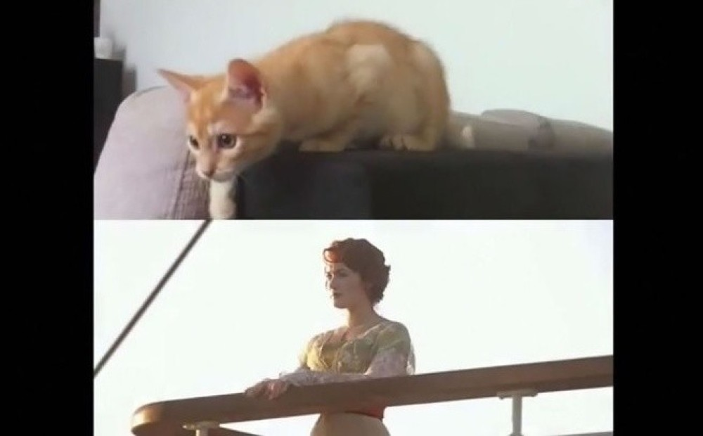 вторых, коты титаник фото застройка, прекрасная