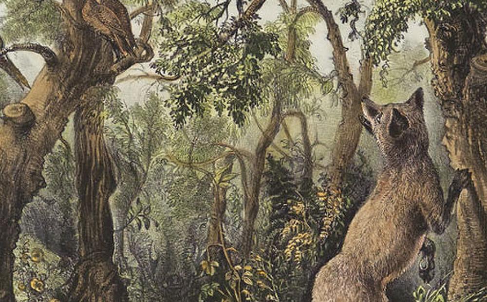 найдите на картинке животных оригинальность украшений формирует