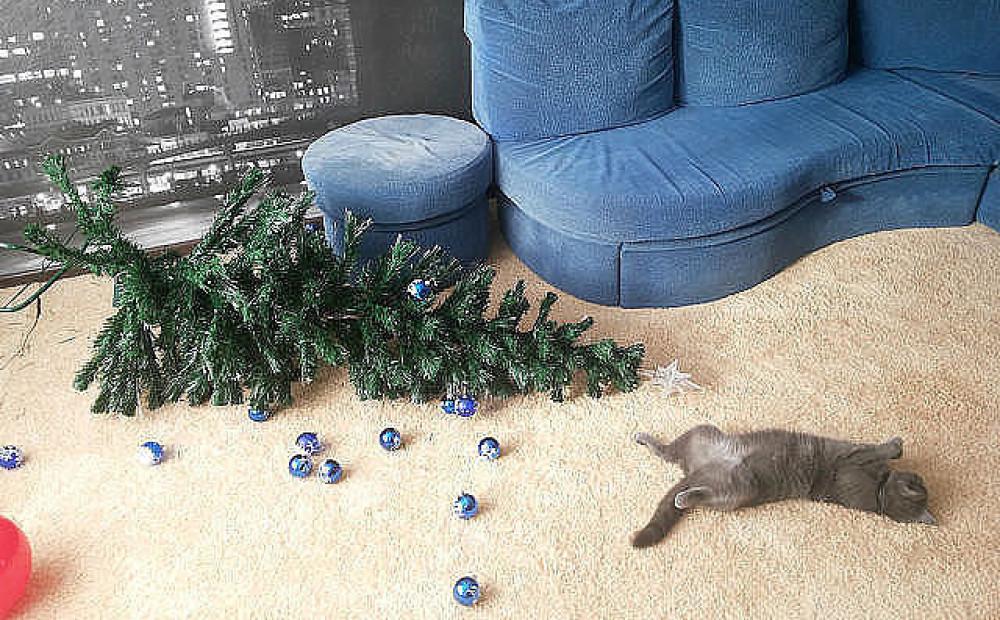 насекомые, смешные картинки про котов и елку что